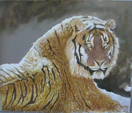 Etude De Tigre