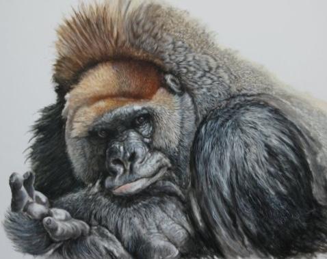 alexi le gorille